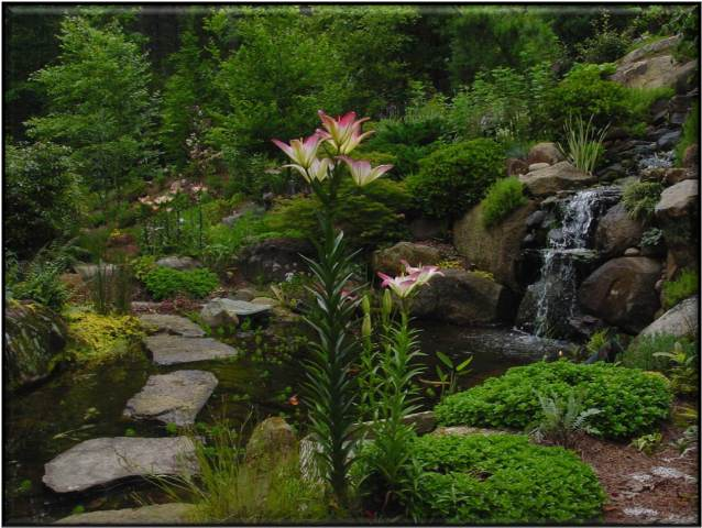 Creative Garden Spaces Inc, Summerfield NC, water feature, water garden, natural waterfall, koi pond, stepping stones, landscape boulders