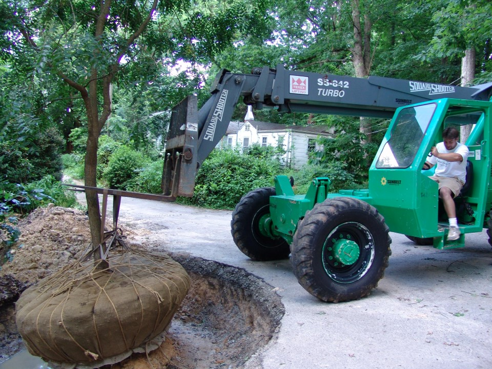 Creative Garden Spaces Inc, Oak Ridge NC, tree transplanting, large tree planting, landscaping