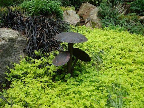 Creative Garden Spaces Inc, грибной свет, ландшафтное освещение, почвопокровные